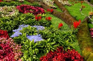 flori parc